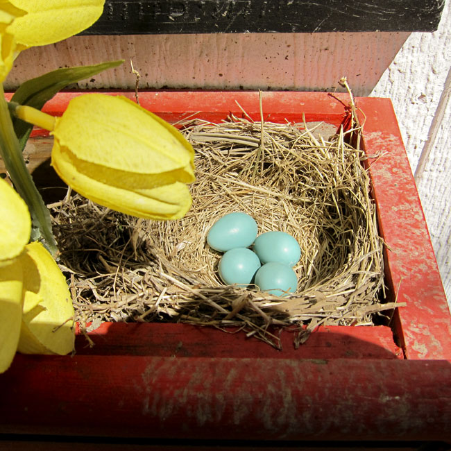 four-eggs-web