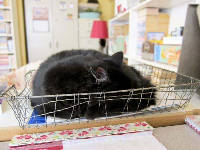 web atticus basket