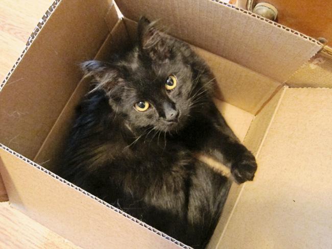 atticus box