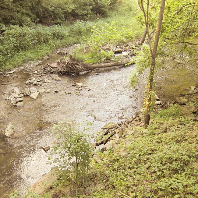 creek web