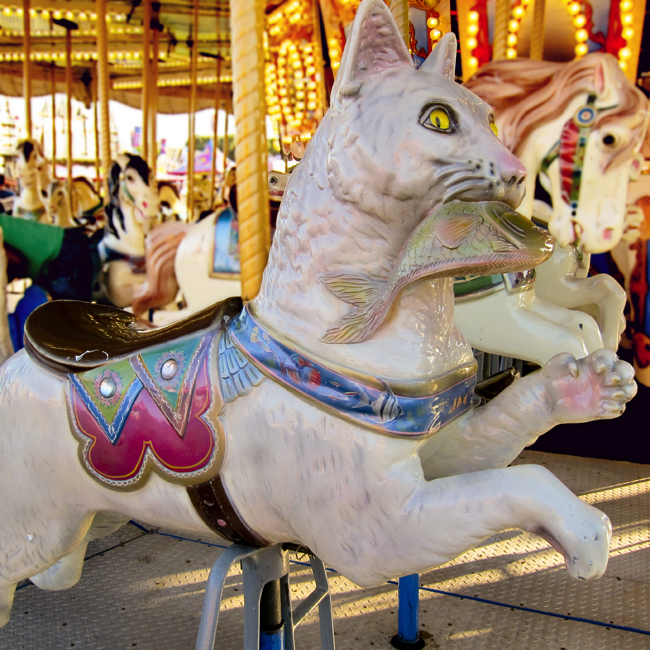 carousel cat web
