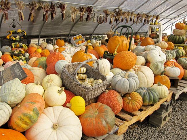 inside-pumpkins-web