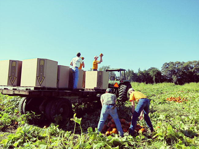 pumpkin-patch-workers-web