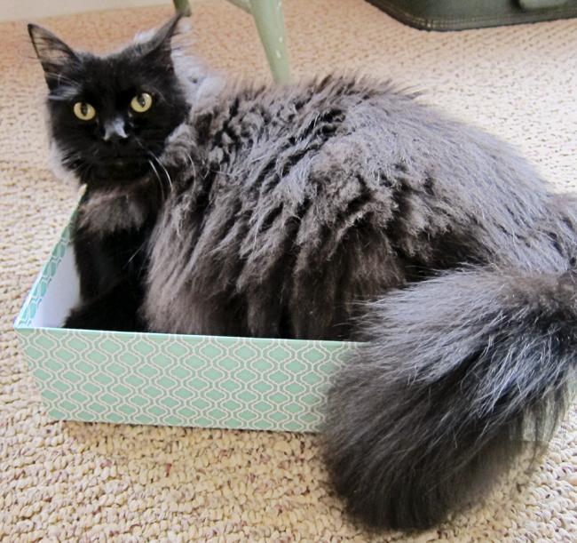 planner cat